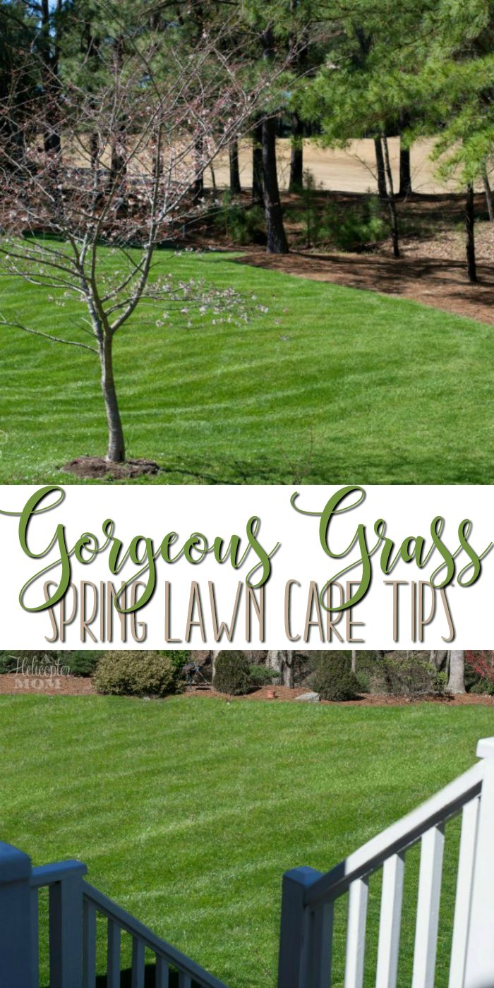 early spring lawn care tips - 700×1400