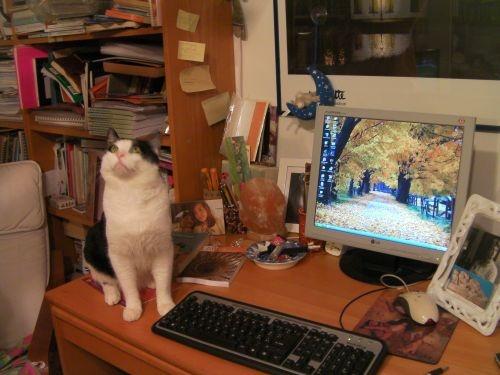 libreria, scrivania e gatto di antonella cilento