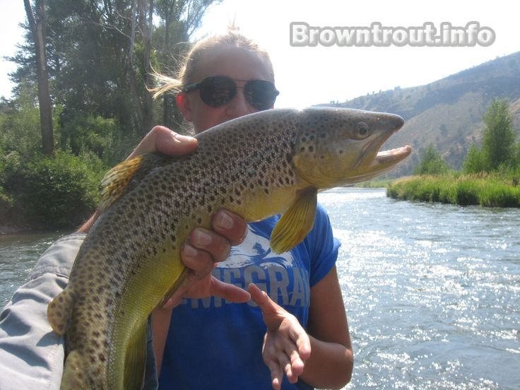 Trout Fishing Tips. A list of tricks you can try to catch more trout.