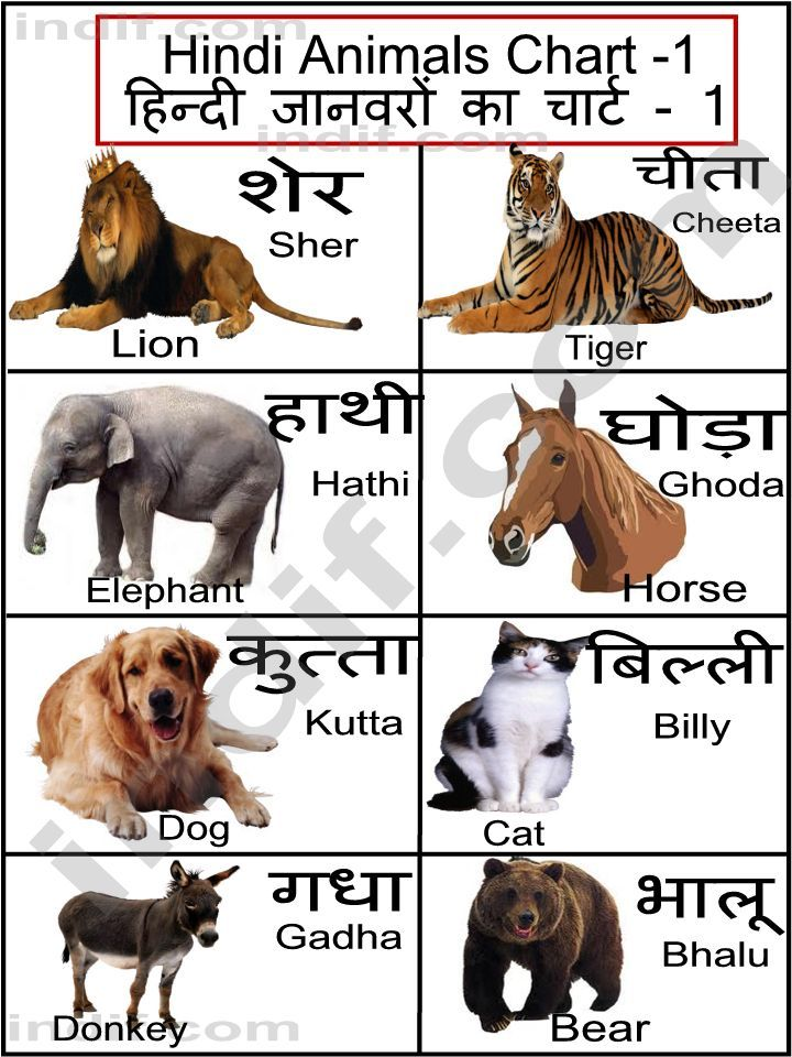 Hindi terms for a few common animals Hindi language