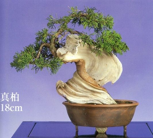 Bonsai Haus 411 best bonsai images on bonsai bonsai forest and