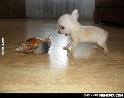Too cute!!  :-)