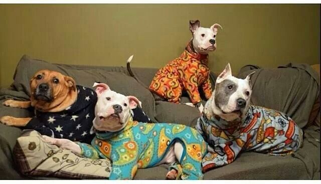 I sell onesies with dogs on them. These are onesies with dog in them. ha. Cute. Omg... jammies!!! ♥♥♥