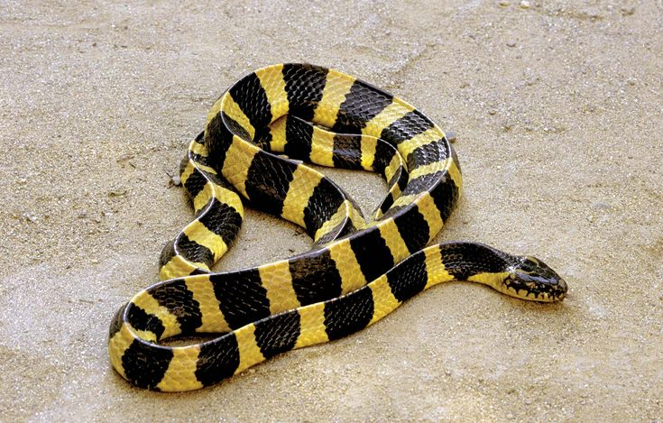 9 of the World's Deadliest Snakes