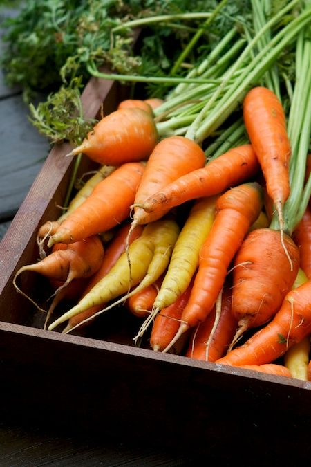 Tips for growing carrots including how to plant, how much to water them and more<3