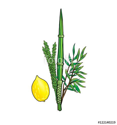 "Download the royalty-free photo ""Sukkot. Jewish traditional four species for Jewish Holiday Sukkot. Vector illustration. Jewish traditional four species lulav, etrog isolated on white background."" created by sofiartmedia at the lowest price on Fotolia.com. Browse our cheap image bank online to find the perfect stock photo for your marketing projects!"