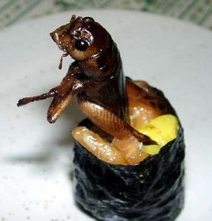 Insect Sushi Edible Creatures Weird Food Sushi Sushi Pictures