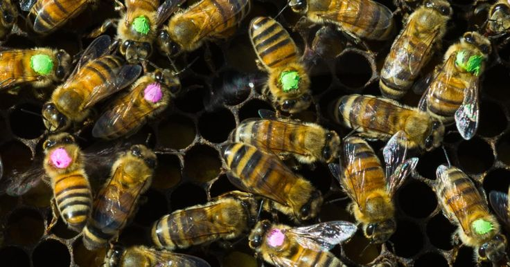 Exposure to tetracycline a commonly used antibiotic in beekeeping drastically perturbs the gut microbiome and elevates mortality in honeybees