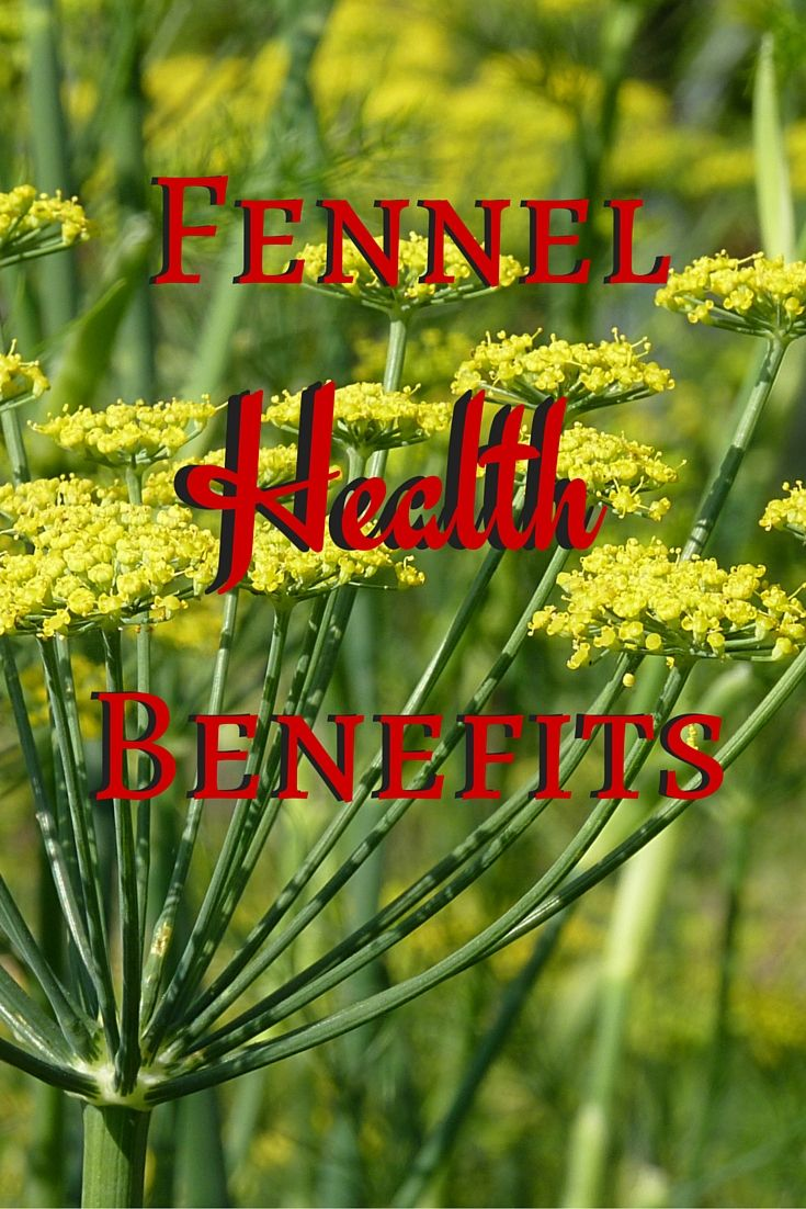 Fennel Health Benefits - Dr. Debbie Ozment Explains the benefits of Fennel and other herbs on her blog
