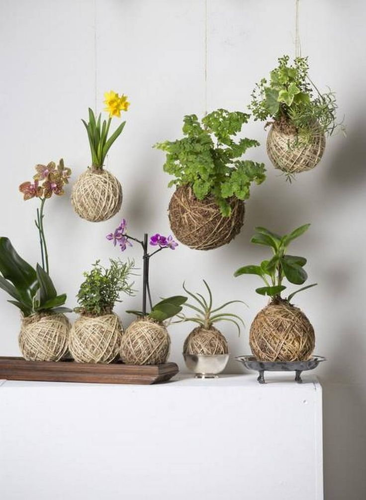 Hanging: l-r Yelow Daffodil, Maidenhair Fern, Herb Kokedama includes Prostrate Rosemary, Thyme & Variegated Ivy. Bottom row: l-r Tiger orchid, Herb Kokedama includes Rosemary & Snapdragon, Mini Purple Phalaenopsis Orchid, Aloe Vera & Baby Rubber Plant.