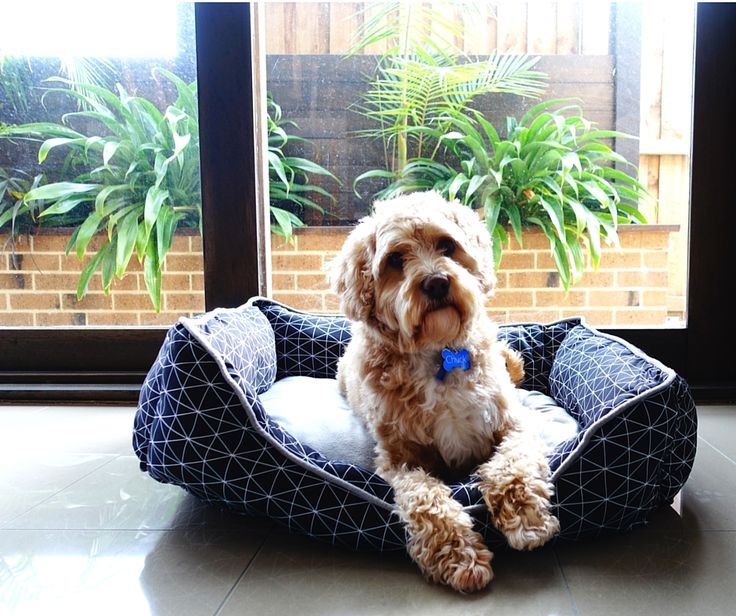 Snuggle in, Winter is here. Keep your fur friends warm with our plush dog beds #therejectshop #getsavvy #bargain