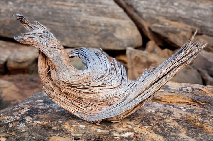 """Photograph of uniquely curved piece of wood on a boulder. Image title: Curves on a Rock I often photograph wood fragments and I wonder what part of a beautiful living tree they were once a part of. All photographs are original and photographed by artist Bob Estrin. Photographs are available in a variety of sizes as a print or as a gallery wrapped canvas. Photograph sizes available: Using the """"Select Options"""" drop down menu section to the right - Photograph matted to a 11"""" x 14"""" mat, ready…"""