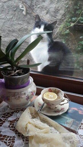 Melisa tea