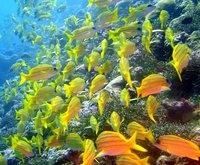 Apo Reef, Mindoro, Philippines