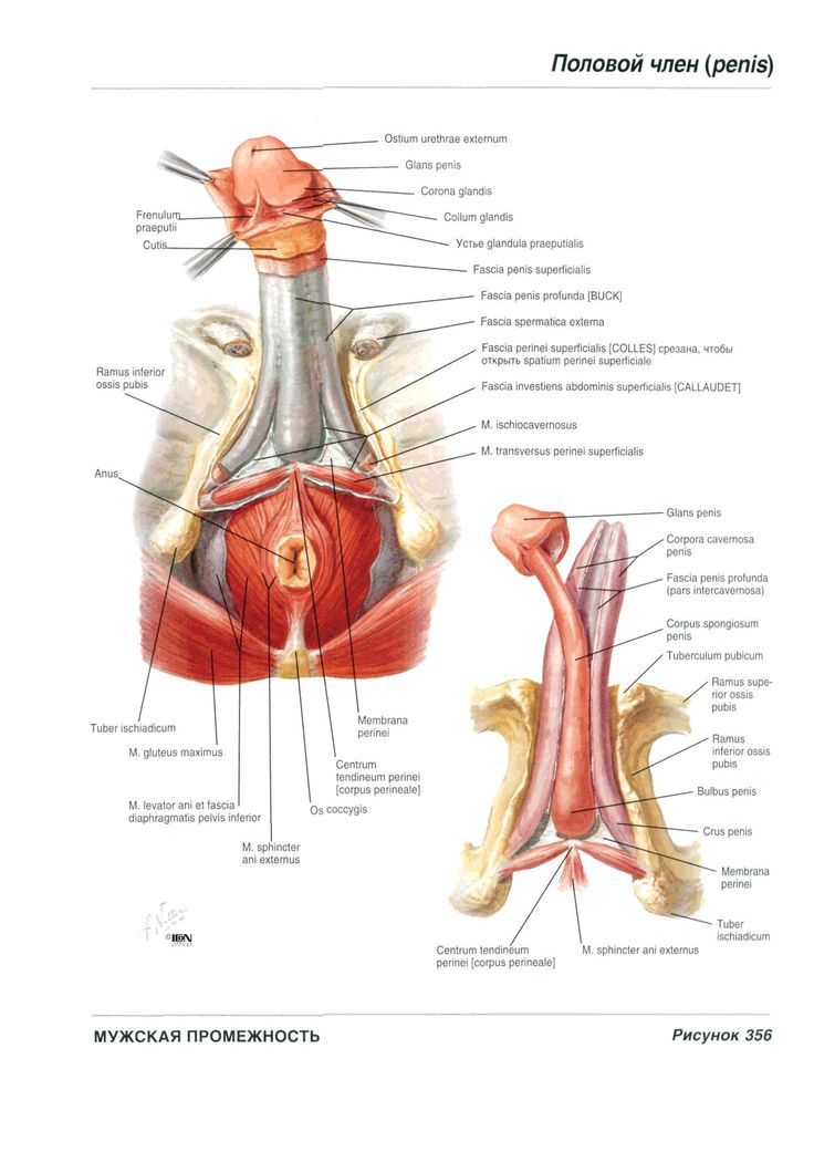 40 best Reproductive system images on Pinterest | Human anatomy ...