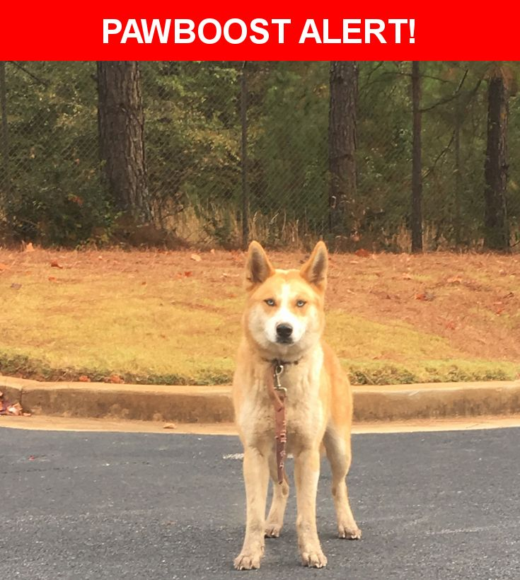 Is this your lost pet? Found in Riverdale, GA 30274. Please spread the word so we can find the owner!  Description: Female Husky  Blue eyed   Brown/ white  Nearest Address: Wynthrope Forest Apartments, Webb Road, Riverdale, GA, United States