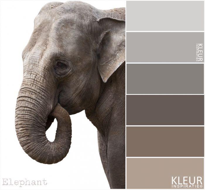 Olifant mooie tinten bruin en grijs
