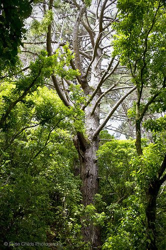Trees at Zealandia   © Elyse Childs Photography