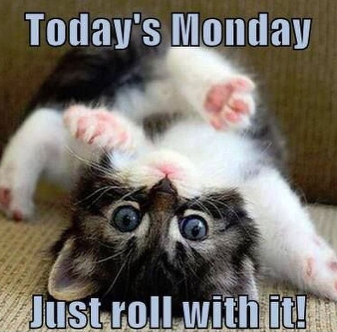 15 Happy Monday Meme | Good morning funny, Monday humor, Monday memes