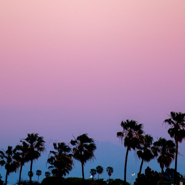 #palms #california #sunset #marcocorso