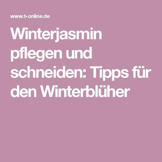 Winterjasmin pflegen und schneiden: Tipps für den Winterblüher