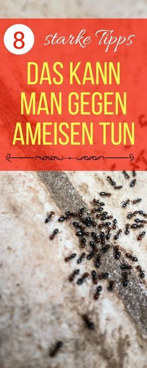 Die Besten 25+ Ameisen Im Haus Bekämpfen Ideen Auf Pinterest