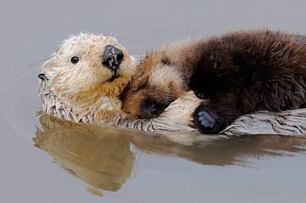 Cuddles Otters Animals Pinterest The O Jays