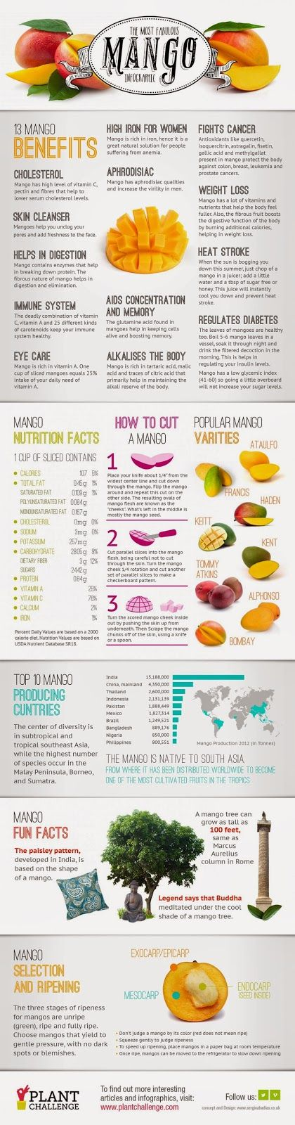Mango Fruit health benefits, key nutrients, varieties, stages of ripeness and other interesting facts.  All About Mangoes #Infographic