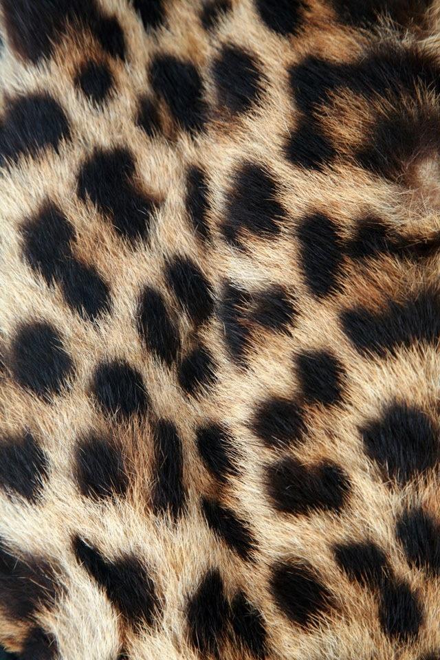Leopard Background Leopard Wallpaper Fur Background