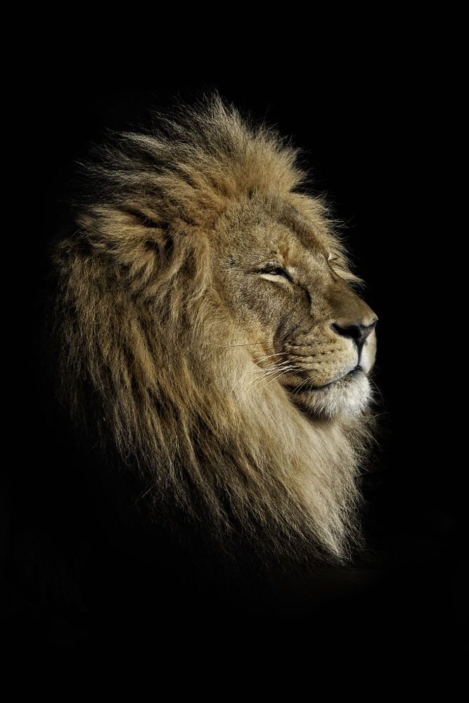 The kings profile by Darren Patterson on 500px