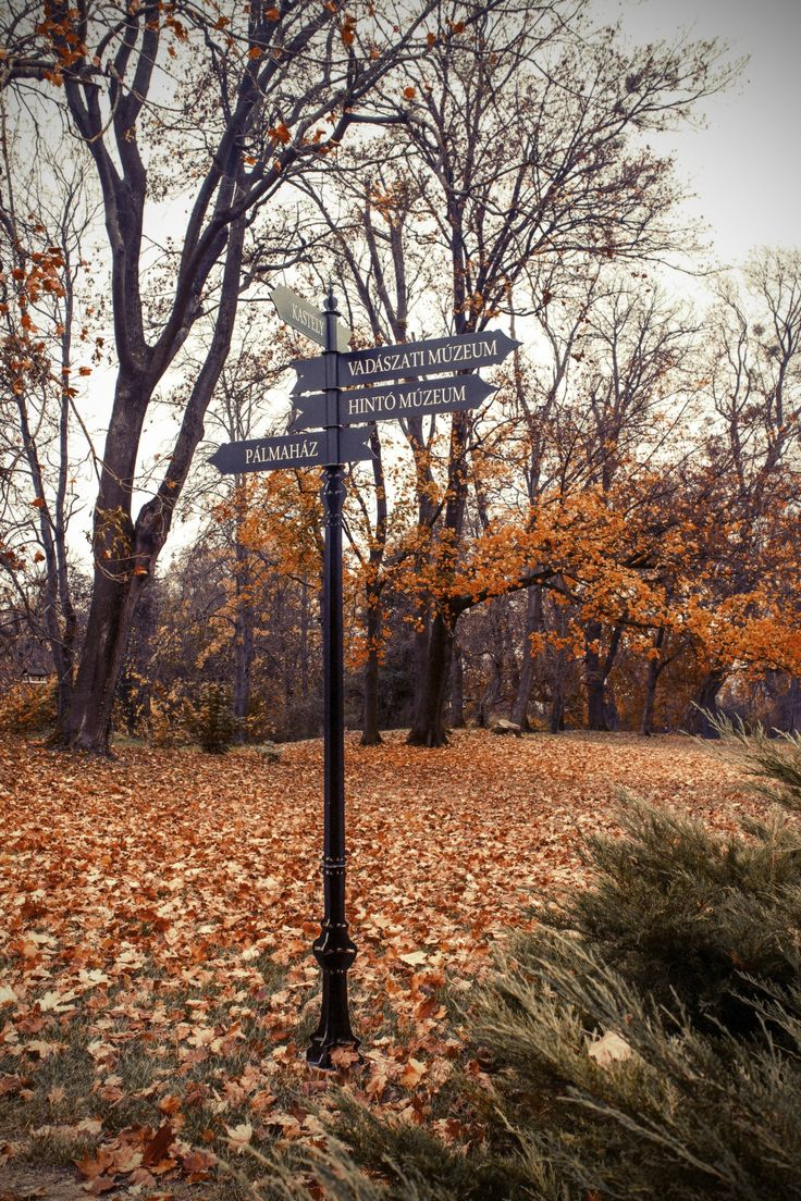 Park by Kovács Gábor on 500px