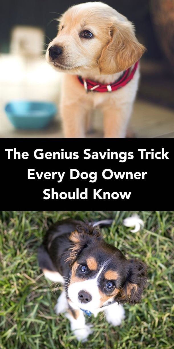 Dog Training Chicago Dog Training No Leash Dog Training Collar