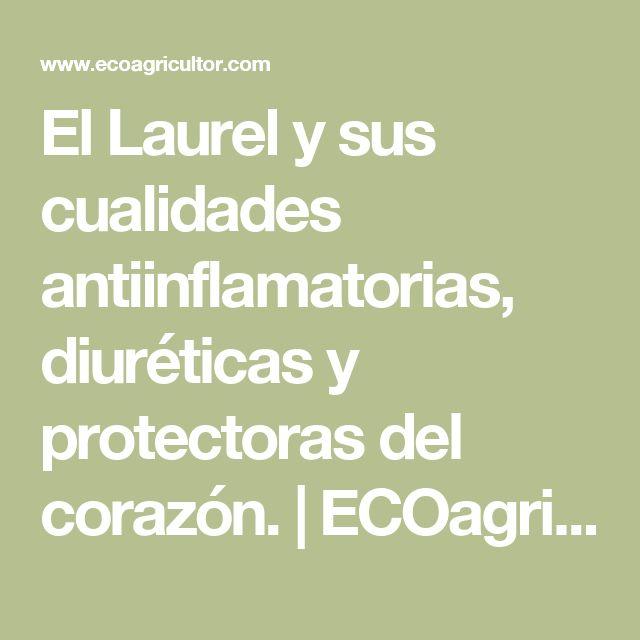 El Laurel y sus cualidades antiinflamatorias, diuréticas y protectoras del corazón.   ECOagricultor