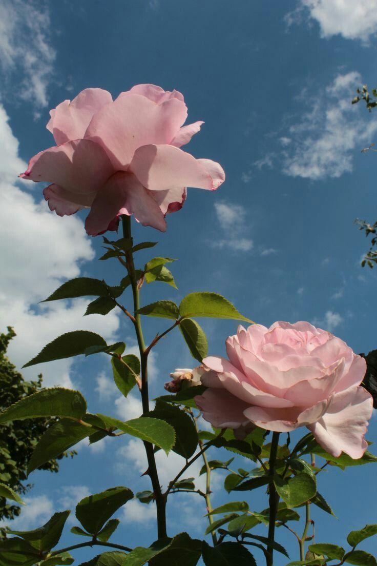Pinterest Carriefiter 90er Jahre Mode Street Wear Street Style Fotografi 90er Carriefiter Aesthetic Roses Aesthetic Wallpapers Flower Aesthetic