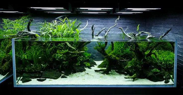 ... about Aquarium on Pinterest Aquascaping, Planted aquarium and Aga