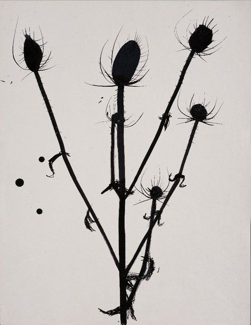 Zaira - American Artist Ellsworth Kelly Exhibits His Flower and Plant Drawings in New York : TreeHugger