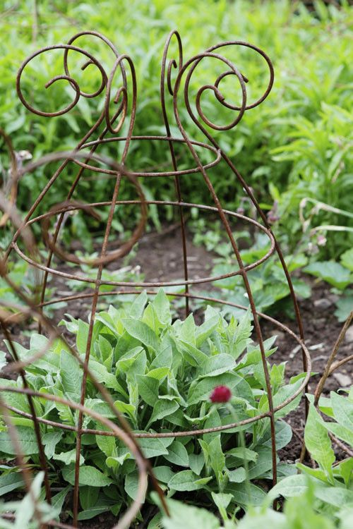 Plant Supports | from Plant Belles