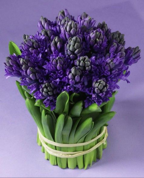 187 best hyacinth images on pinterest easter bulbs and scotts flowers nyc 5 flower arrangements gift ideas for secretaries day negle Gallery