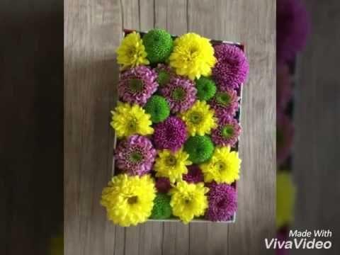 گل های داوودی www.hodoliva.com