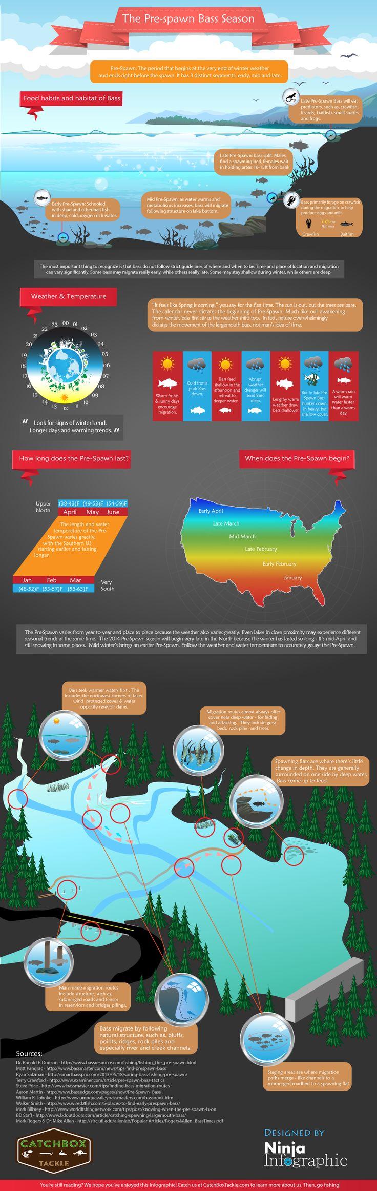 Pre Spawn Bass Season (Infographic) | Ninja Infographic