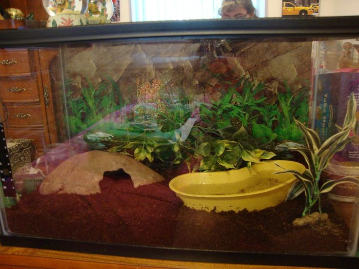 30 best images about fire belly toads on pinterest frogs for Habitat container