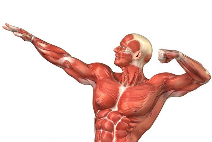 Молочная кислота в мышцах. Боль в мышцах после тренировки
