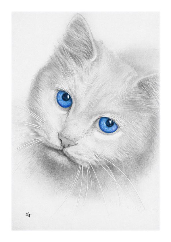 Bleistiftzeichnung Katze Augen Blau Din A4 Von Josef Hinterseer