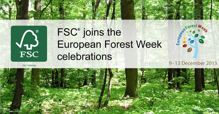 Happy European Forest Week! #EFW2013 Let's make the #smart choice on Europe's #forests! Let's take care of them and use them #responsibly.