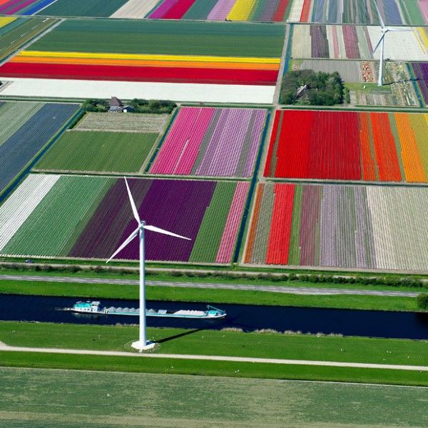 Aerial photographs of tulip fields in the Netherlands, by Normann Szkop | 1001 Gardens