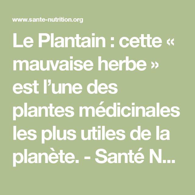 Le Plantain : cette « mauvaise herbe » est l'une des plantes médicinales les plus utiles de la planète. - Santé Nutrition