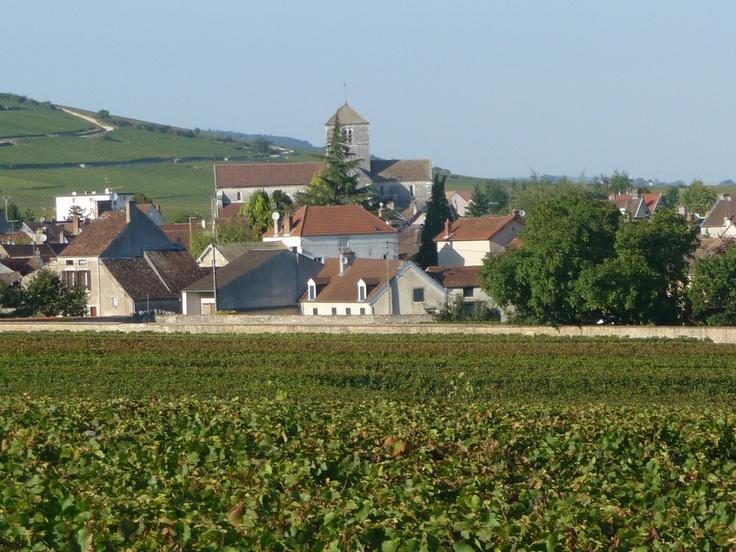 Egise St Symphorien depuis les vignes, Nuits St.-Georges, Côte d'Or, Bourgogne, France.