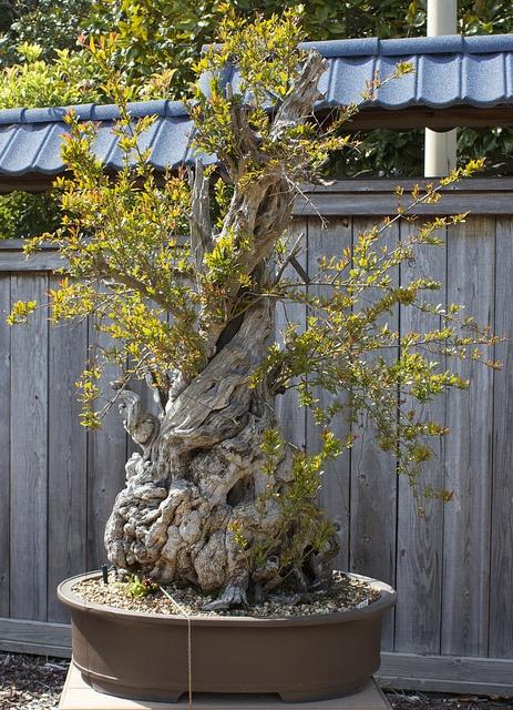 Awesome bonsai !