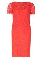 Womens **Tall Coral Lace Shift Dress- Coral