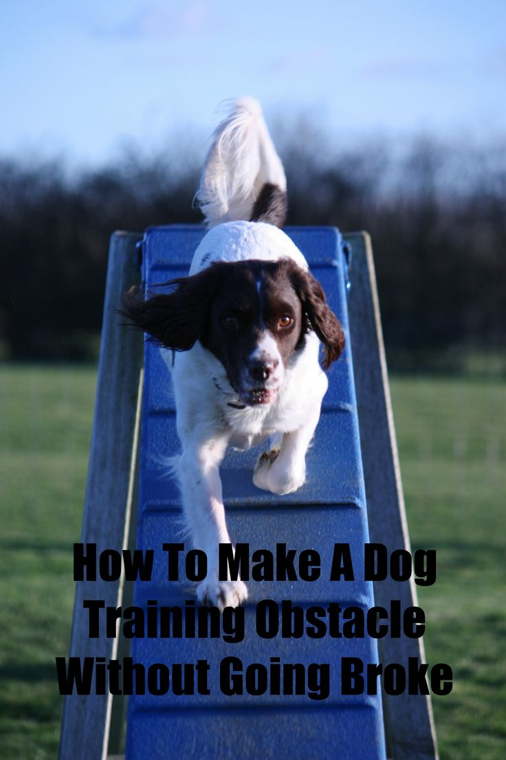 How To Make A Dog Training Obstacle Course Without Going Broke: Want To Make  A